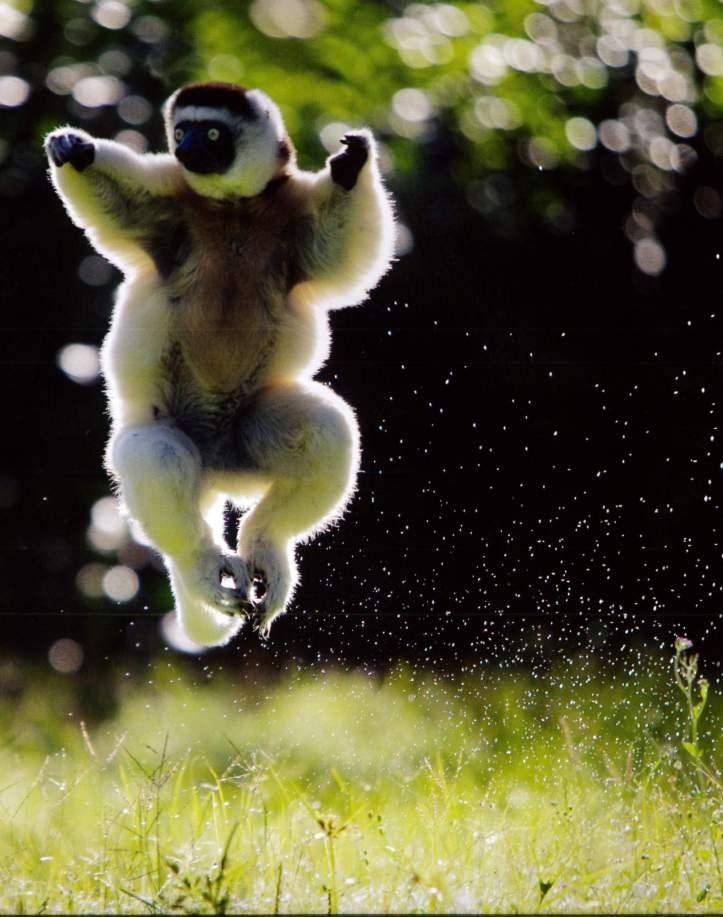 Rainforest Monkey