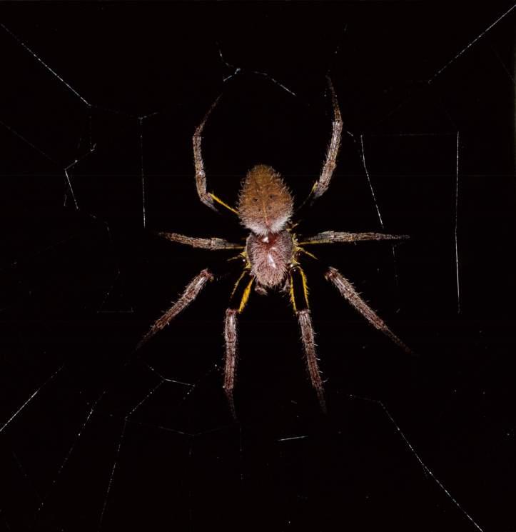 Rainforest Spider