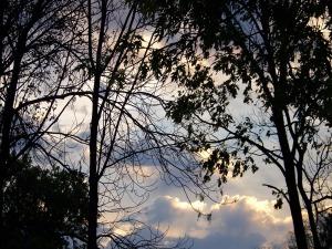 trees dawn