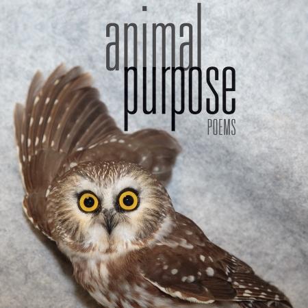 animal-sq